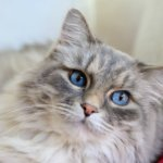 6 Ways to Pamper Your Cat