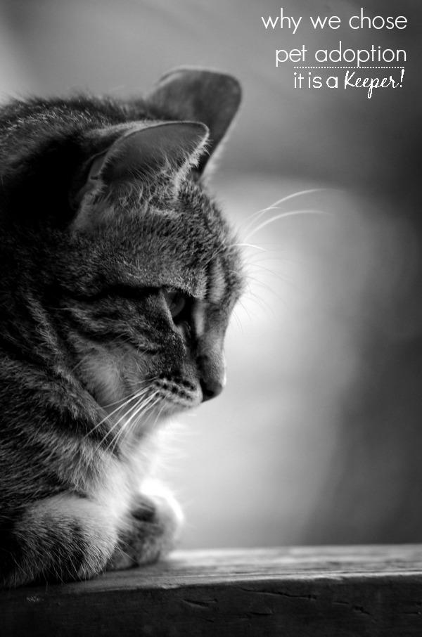Why We Chose Pet Adoption