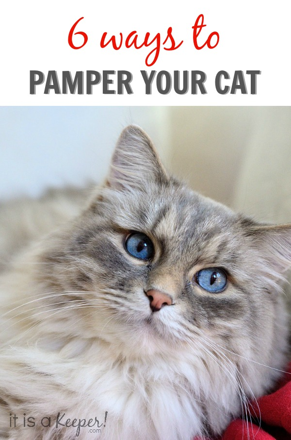 6  WAYS TO PAMPER YOUR CAT - IT IS A KEEPER