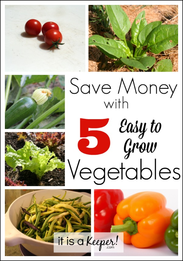 Save Money with 5 Easy to Grow Vegetables HERO - It is a Keeper