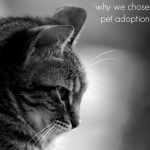 Why We Chose Pet Adoption