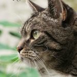 Lessons from Jack: What our Shelter Cat Has Taught Us